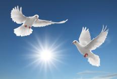 lacher colombes mariage, sublimez événement avec un merveilleux vol de colombes
